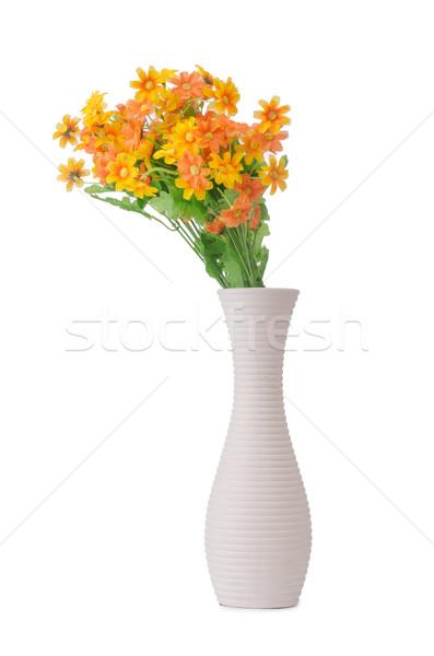 Daisy camomille fleurs isolé blanche herbe Photo stock © Elnur