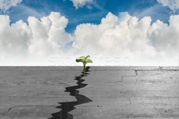 New life crestere crăpa verde frunze Imagine de stoc © Elnur