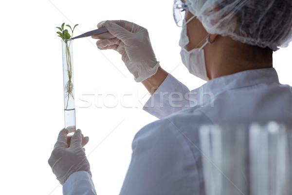 Femminile scienziato ricercatore esperimento laboratorio medico Foto d'archivio © Elnur