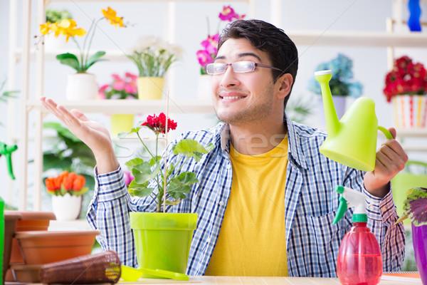 Gardener florist working in a flower shop with house plants Stock photo © Elnur