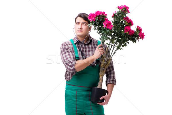 Jeune homme jardinier isolé blanche médecin santé Photo stock © Elnur