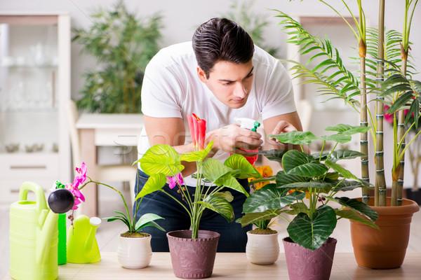 Uomo care impianti home fiore Foto d'archivio © Elnur