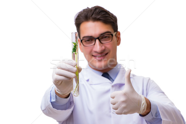 Scientist with green seedling in glass isolated on white Stock photo © Elnur