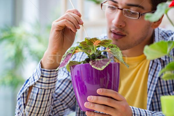 Jonge man bloemist werken bloem gras Stockfoto © Elnur