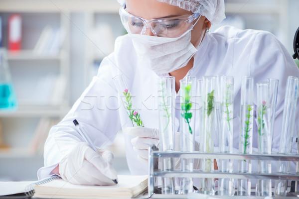 Női tudós kutató kísérlet laboratórium orvos Stock fotó © Elnur