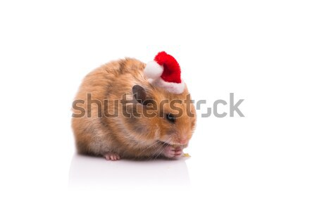 Cute hamster with santa hat isolated on white Stock photo © Elnur
