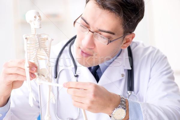 Orvos magyaráz emberi test csontváz férfi Stock fotó © Elnur