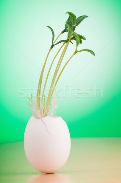 Eggs with green seedling in new life concept Stock photo © Elnur
