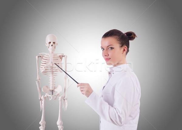 Médico esqueleto gradiente homem médico corpo Foto stock © Elnur