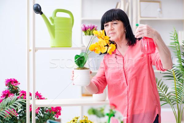 Mulher florista trabalhando natureza casa Foto stock © Elnur
