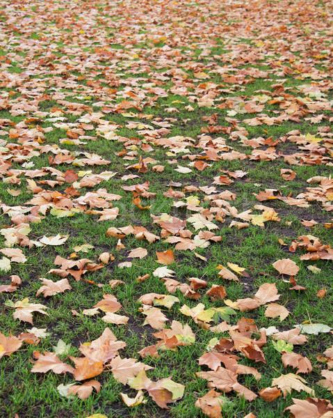 Automne saison d'automne forêt printemps herbe paysage Photo stock © Elnur