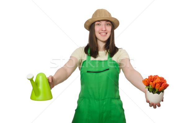 Girl watering plants on white Stock photo © Elnur