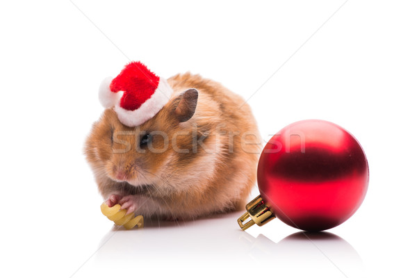 The cute hamster with santa hat isolated on white Stock photo © Elnur