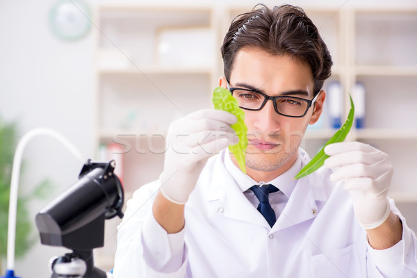 Biotechnology scientist chemist working in lab Stock photo © Elnur