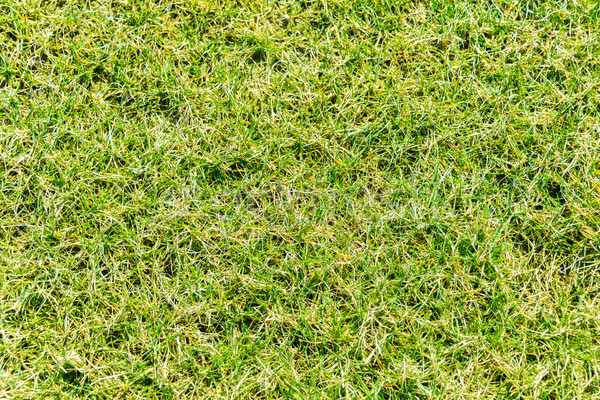 Close up of green grass for your background Stock photo © Elnur