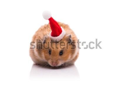 Sevimli hamster şapka yalıtılmış beyaz Stok fotoğraf © Elnur