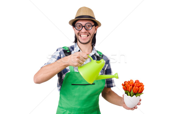 Young funny gardener with tulips and watering can isolated oin white Stock photo © Elnur