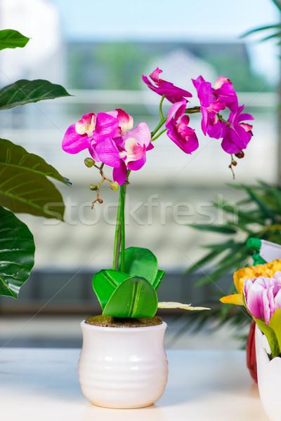 Orchidee Blumentopf home Garten Hintergrund Farbe Stock foto © Elnur