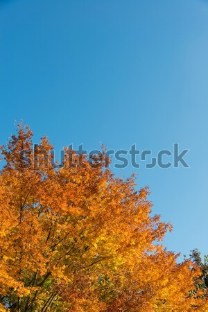 Fall autumn season in the forest Stock photo © Elnur