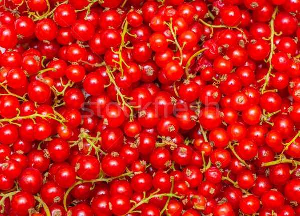 Background made of red currant berries Stock photo © Elnur