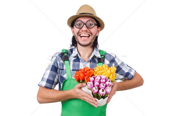 Man gardener with flowers on white Stock photo © Elnur