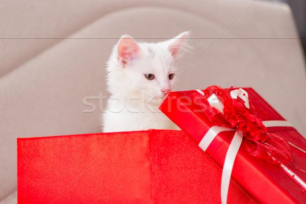 Stok fotoğraf: Beyaz · kedi · sunmak · kırmızı · kutu · bebek