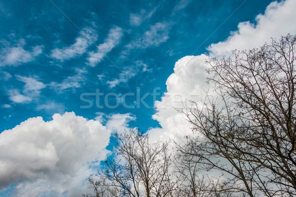 Heldere blauwe hemel hemel boom bos Stockfoto © Elnur