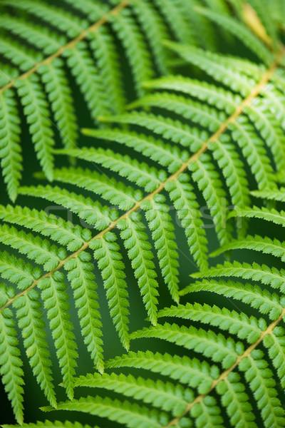 Fougère laisse texture printemps herbe Photo stock © Elnur