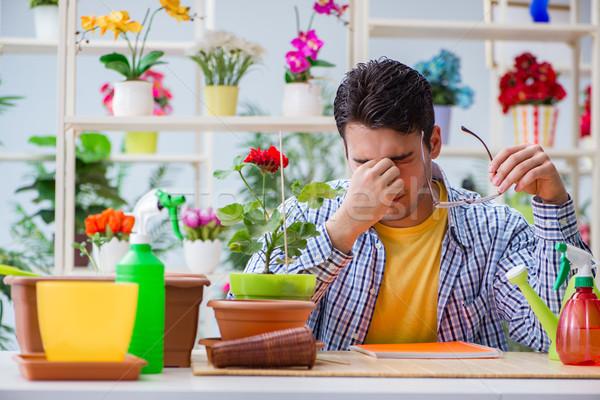 Młody człowiek kwiaciarz pracy kwiaciarnia kwiat trawy Zdjęcia stock © Elnur