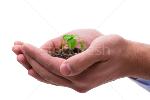 Hand holding seedling in new life concept on white Stock photo © Elnur