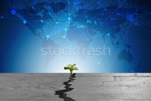 New life concept with sprout growing through crack - 3d rendering Stock photo © Elnur