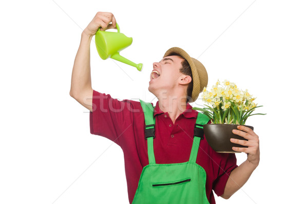 Young gardener with flower and pot isolated on white Stock photo © Elnur