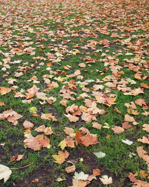 Automne saison d'automne forêt printemps herbe feuille Photo stock © Elnur