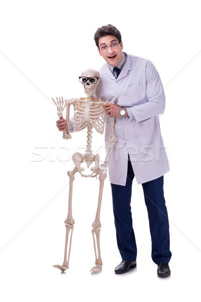 Jeunes médecin squelette isolé blanche homme Photo stock © Elnur
