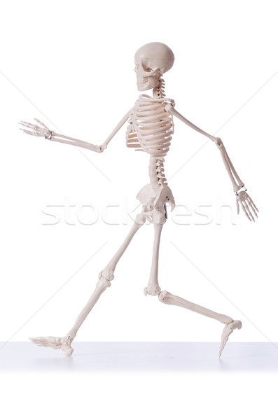 Skeleton isolated on the white background Stock photo © Elnur