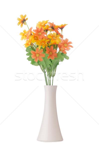 Százszorszép kamilla virágok izolált fehér tavasz Stock fotó © Elnur