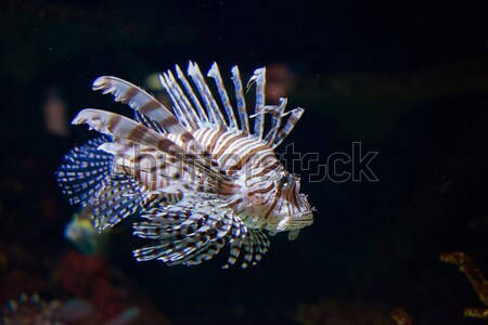 Сток-фото: тропические · рыбы · воды · природы · океана · зеленый · группа