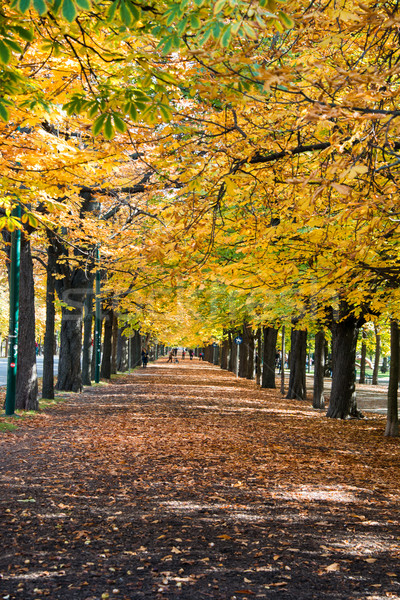 Alley with trees on autumn day Stock photo © Elnur