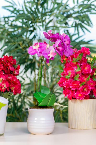 Stock fotó: Virágok · edény · otthon · virág · kert · háttér