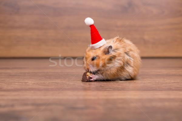 Cute hamster hoed tabel grappig Stockfoto © Elnur