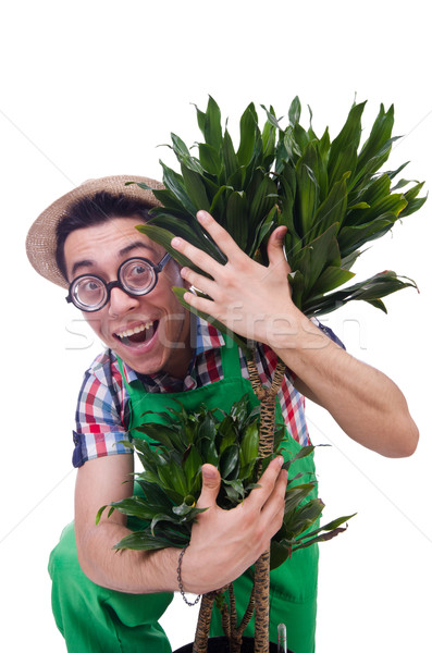 Funny man trimming plans in his garden Stock photo © Elnur