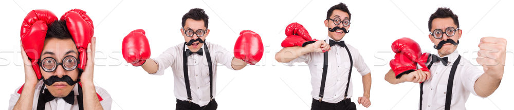 The funny boxer isolated on the white background Stock photo © Elnur
