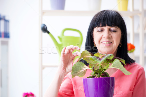 Woman florist working in the flower shop Stock photo © Elnur