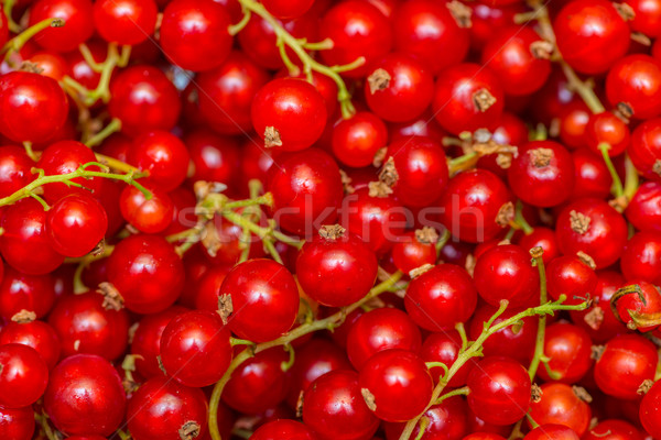 Rosso ribes frutti di bosco texture alimentare natura Foto d'archivio © Elnur