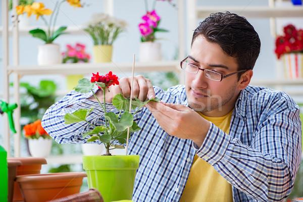 Joven florista de trabajo flor hierba Foto stock © Elnur