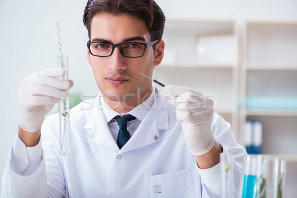 Biyoteknoloji bilim adamı kimyager çalışma laboratuvar adam Stok fotoğraf © Elnur