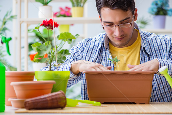 Stock photo: Young man florist working in a flower shop
