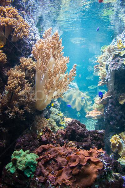 тропические рыбы воды природы океана зеленый группа Сток-фото © Elnur