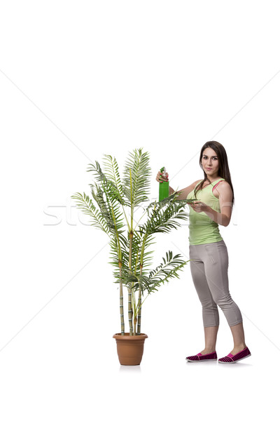 Woman taking care of plant isolated on white Stock photo © Elnur