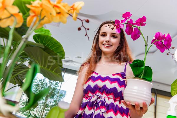 Stock fotó: Fiatal · nő · elvesz · törődés · otthon · növények · virág